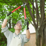 Why is tree care important